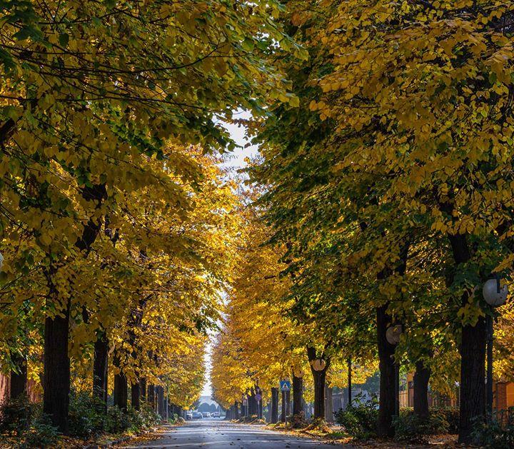Carmagnola alberi in citt una risorsa da valorizzare for Una citta sulla garonna